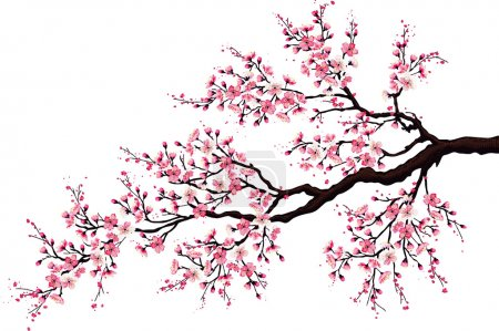Illustration for Branch of a blossoming cherry tree isolated on a white background - Royalty Free Image
