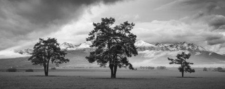 Photo pour Trois arbres devant les montagnes - image libre de droit