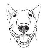 bull terrier funny face