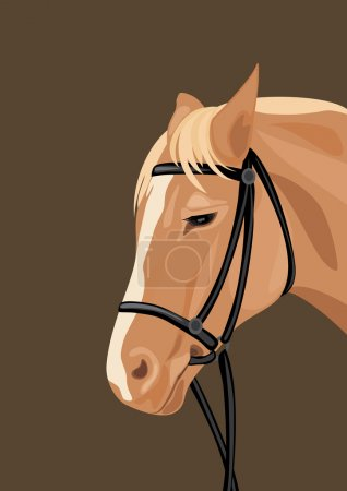 Horse head on the dark background