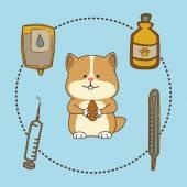 PET a zvířecí shop