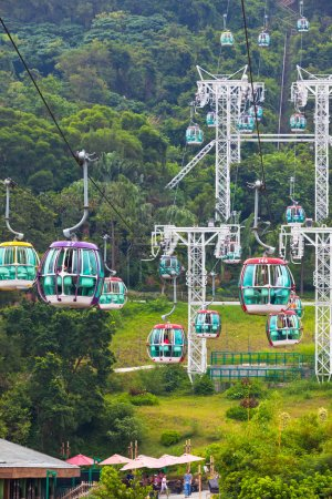Cable cars over tropical trees