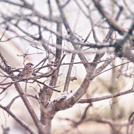 Photo for Image of a winter scene with a brown sparrow sitting in a tree, snow falling. - Royalty Free Image