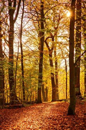 Photo pour Image d'un sentier forestier lumineux et coloré . - image libre de droit
