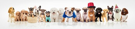 Large group of dogs on white background