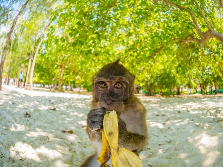 Monkey on Poda beach in Krabi