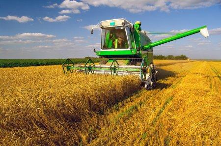 Photo pour Combiner moissonneuse-batteuse récolte de blé le jour ensoleillé d'été . - image libre de droit