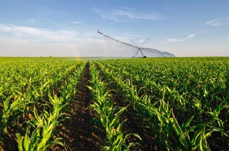 Photo pour Système d'irrigation agricole arrosage champ de maïs sur la journée d'été ensoleillée. - image libre de droit
