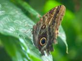 Motýl na rostliny v zahradě