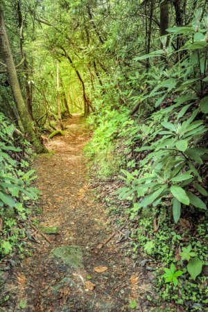 Trace trail near Cumberland River