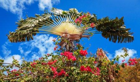 Photo pour Palmier entouré de fleurs rose vif avec ciel bleu en toile de fond - image libre de droit