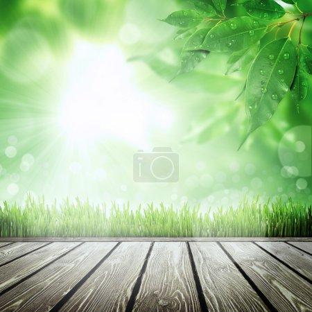 Photo pour Fond nature printemps avec de l'herbe - image libre de droit