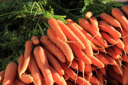 Photo for Orange carrot as fresh farm vegetable background - Royalty Free Image