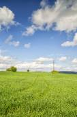 Agricultural field of green wheat , grass and blue sky with clouds
