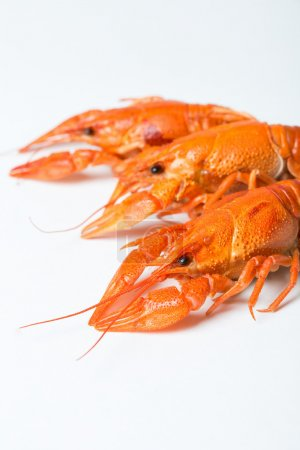 Photo for Boiled crawfish on a white background - Royalty Free Image