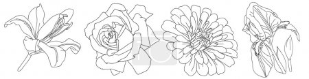 Illustration for Flowers rose pattern, iris and lily, vector illustration - Royalty Free Image