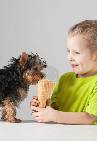 Happy little girl feeding of yorkshire terrier