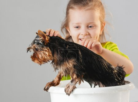 Little girl wash Yorkshire Terrier