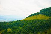 summer in the mountains. Carpathian, Ukraine, Europe.