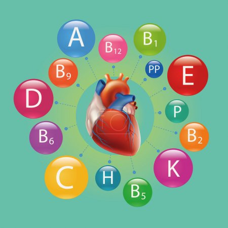 Schematic representation of heart