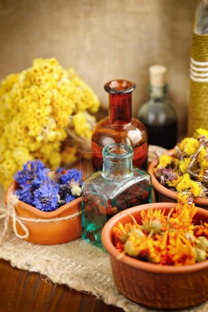 Photo for Healing herbs and tinctures in bottles on sackcloth, dried flowers, herbal medicine - Royalty Free Image