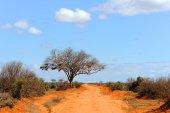 """Постер, картина, фотообои """"Пейзаж с деревом в Африке"""""""