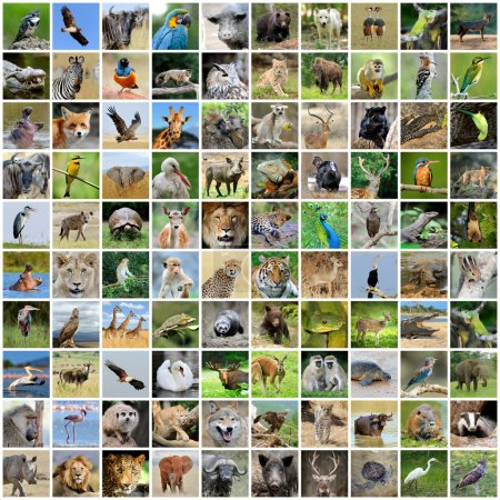Collage of 100 photos of wildlife. Animals and bir...