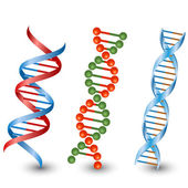 Dna strands Vector on the white background