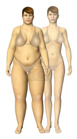 3d fat and thin woman before and after concept