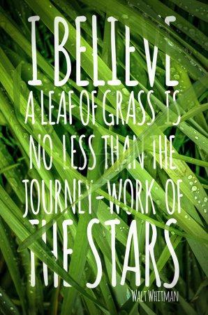 """Photo pour Citation """"Affiche : Je crois qu'une feuille d'herbe n'est pas moins que le travail de voyage des étoiles. Walt Whitman - image libre de droit"""