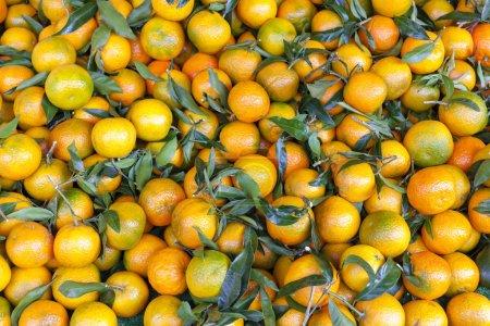 Tangerins, market in Forcalquier