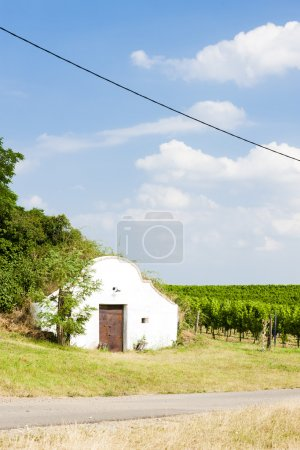 wine cellar with vineyard, Novy Prerov, Czech Republic