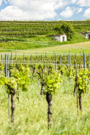 Wine cellars with vineyard in Retz region, Lower Austria
