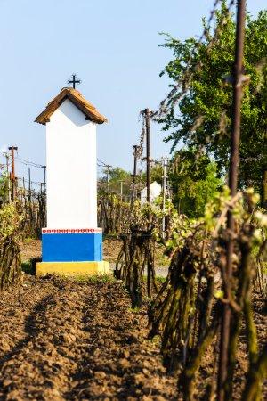 Boga tortur z winnicy w pobliżu Nechory, Republika Czeska