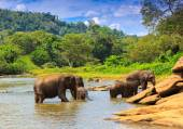 Sloni v řece