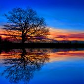 Tree near water on sunset background