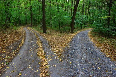 Photo for Landscape with fork rural roads in forest - Royalty Free Image