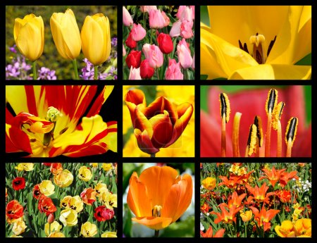 Mosaic photos of tulip flowers
