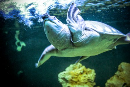 Sea turtles in oceanarium