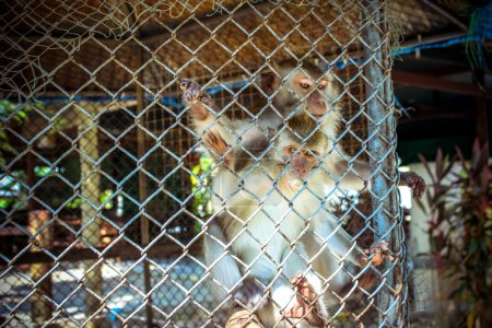 Two monkeys in cage of zoo