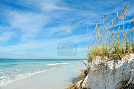 Photo for Beautiful Sand Dunes and Sea Oats on the Coastline of Anna Maria Island, Florida - Royalty Free Image