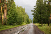Road in forest after rain