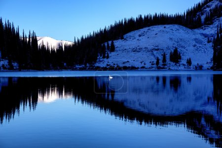 Lonely swan after first snowfall on the lake