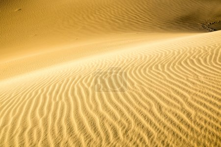 Ripples in a Sand Dune