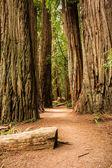 Secret Forest Passage