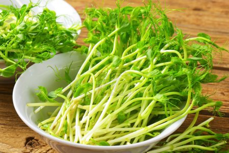 Photo for Detail of fresh green pea sprouts - Royalty Free Image