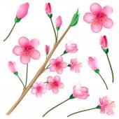 Sakura blossom branch set