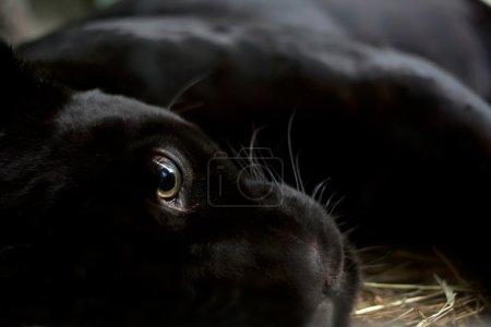 closeup nature animal black mammal zoo