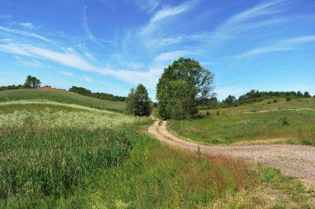 Rural road among fields