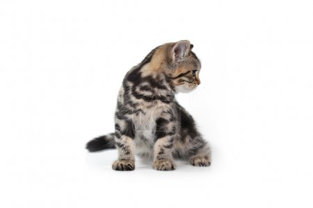 Photo for Cute  tabby kitten on white background - Royalty Free Image